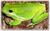 amphibien-und-terraristik-fans