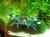 andys-aqua-terrawelt