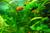 aquarium-news