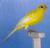 aviariobacariza