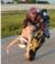 bikercamp