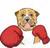 boxer-mops