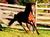 caballosyalgomas