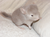 chinchilla-hobbyzucht-lohmann