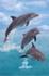 delphinpoker