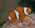 denizaltidunyasi
