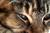 elecats