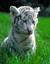 endangered-animals-save-it