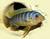 franks-aquaristik-seite