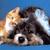 gatosyperrosvalencia