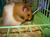hamsterciklar