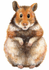 hamsterzucht-arijuna