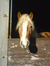 horse-pferd