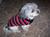 hundepullover-chic