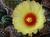 kaktuswebseite