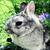 kaninchenreise
