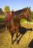 kf-ranch-horses-friends