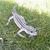 leopardgecko-emsland