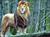 lionghost