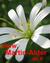 martin-alder