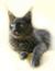 munich-society-cats