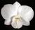 orchideentraum