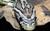 pantherophis-guttatus-snakes