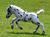 pferde-forum-zum-diskutieren