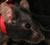 ratonesdomesticos