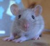 ratten-von-der-raeuberhoehle