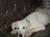 refugio-perros-abandonados