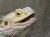 reptilien-welt