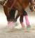 steffis-horsetraining