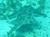 underwaterbiodiversity