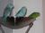 vogelzuchtclaudia